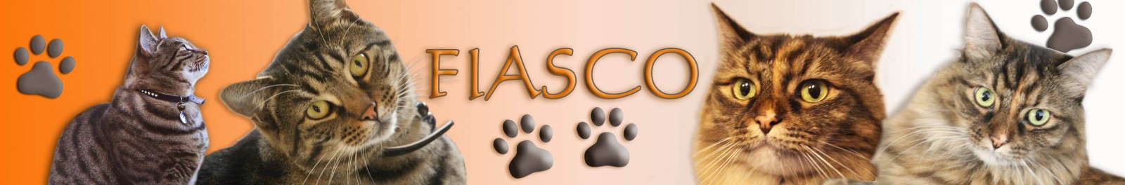 Fiasco Banner 2014 cropped