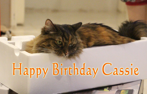 Cats birthday - Cassie in C
