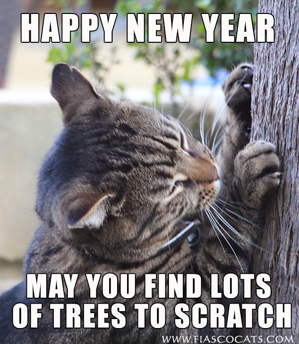 Cat Says Happy new year 2015