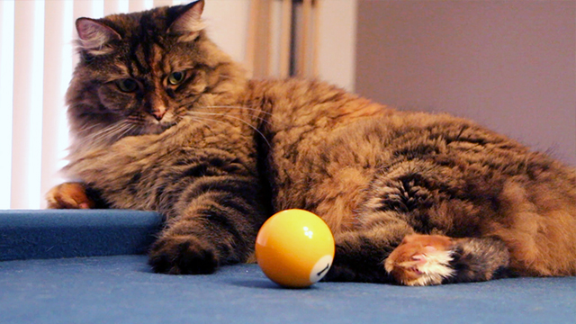 Cat gets lessons in Pool