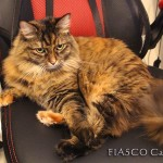 Cassie the cat on racing chair