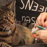Cat receiving a present
