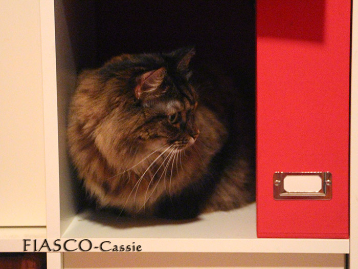 Cat picture - Cassie climbs into cupboard