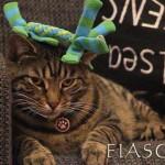 Cat picture - Leos Christmas pressie 2014